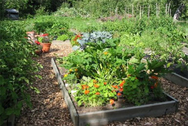 Что такое огород