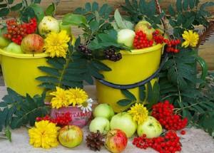 Августовские хлопоты в саду и огороде
